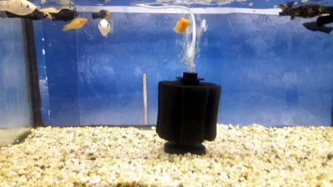 How to choose an aquarium filter